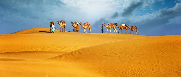 Kamele in der Wüste von Ägypten