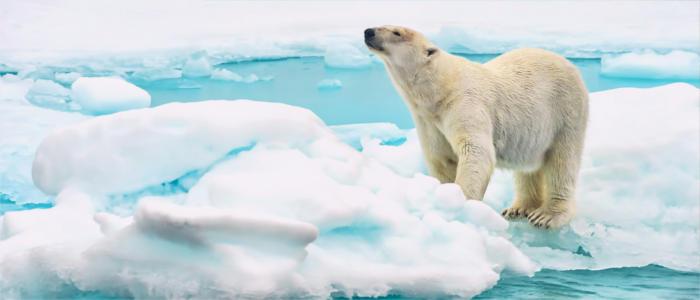Eisbär Bilder In Der Antarktis