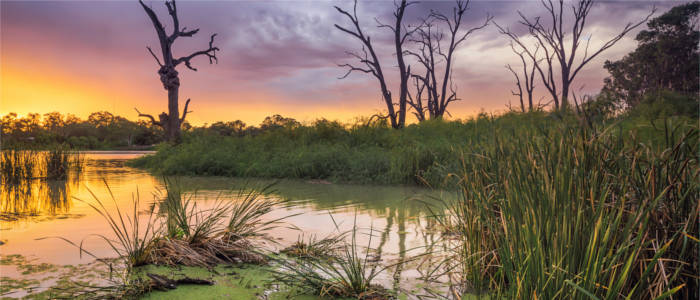 Sumpfgebiet in South Australia - Murray River