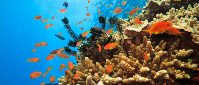 Great Barrier Reef vor Australien