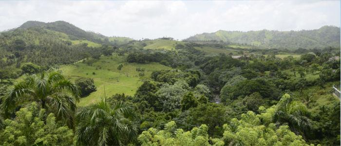 Regenwald in der Dominikanische Republik