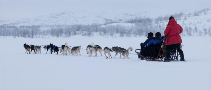 Hundeschlitten fahren in Finnland