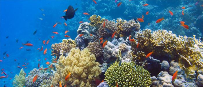 Unterwasserwelt vor Haiti