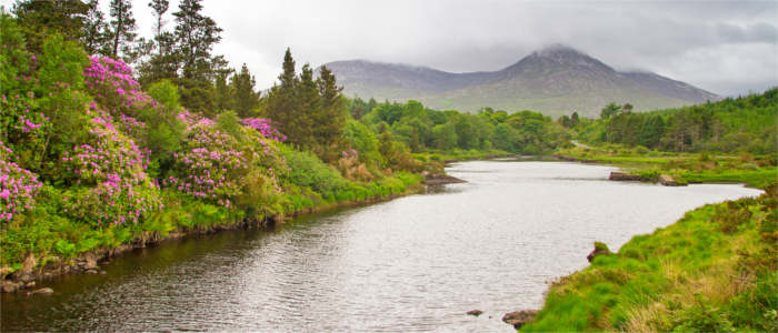 Connemara Berge in Irland