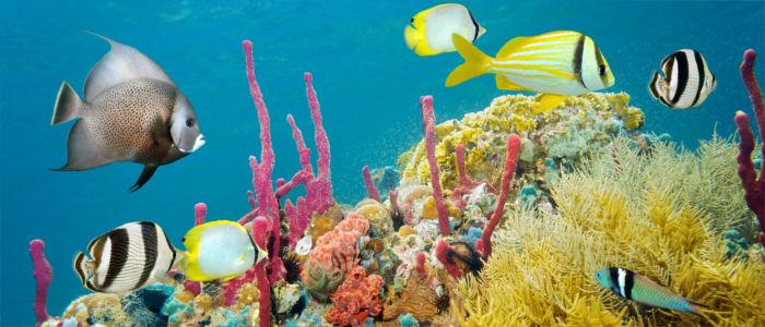 Korallenriff im Meer vor Jamaika