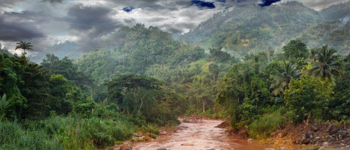 Regenwald von Jamaika