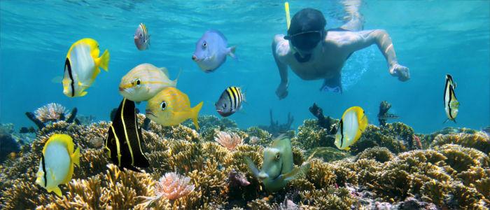 Tauchen im Meer zwischen Korallen und Fischen in Kuba