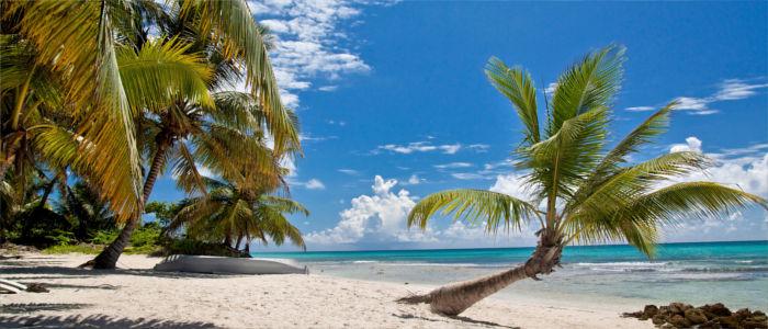 Palmen am Strand von Kuba
