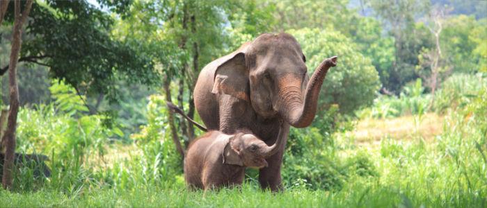 Elefanten in Laos erleben