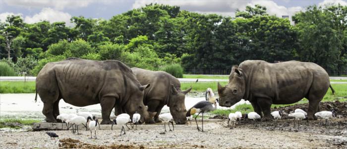 Nashörner in Myanmar
