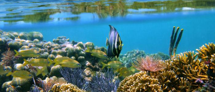 Fische im Korallenriff im karibischen Meer, Panama