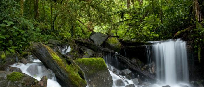 Wasserfall im tropischen Regenwald von Panama