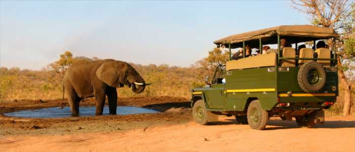 Safari in Sambia