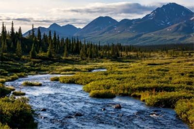 Typische Wildnis in Alaska