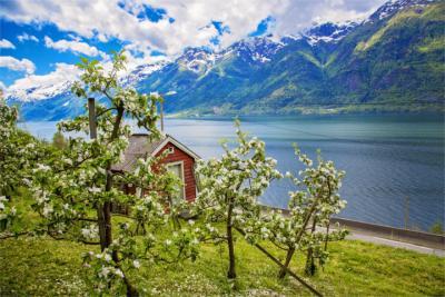 Apfelblüten in Hordaland