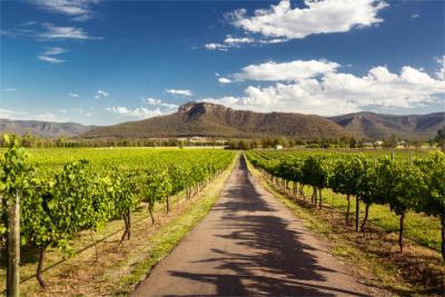 Weinanbau im Hunter Valley