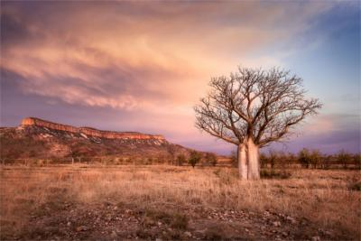 Natur in Kimberley