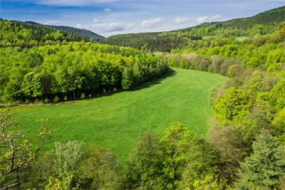 Grünes Thüringen
