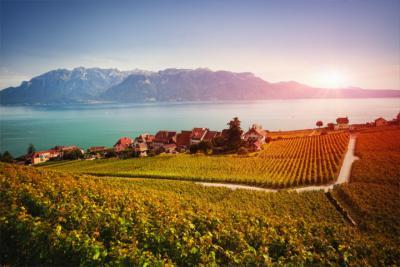 Die Weinregion Lavaux in Waadt