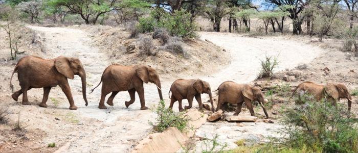 Wilde Elefanten in Südafrika