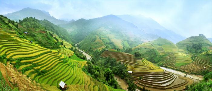 Reisfelder in Vietnam